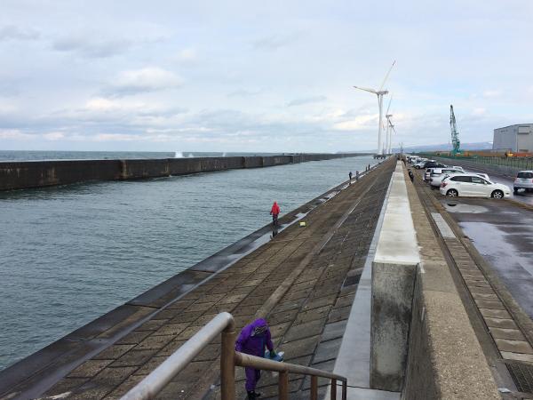 酒田北港水路のハタハタ釣り情報(2017.12.20)