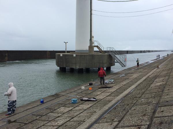 酒田北港水路のハタハタ釣り情報(2017.12.30)