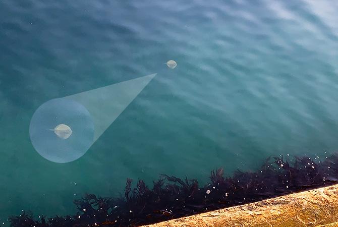 下を見ると泳いでいたのはエイリアン?!w