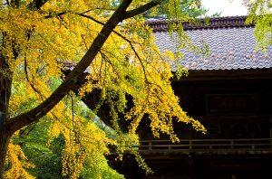 日枝神社門の紅葉 2012.11.7