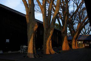山居倉庫の中庭 夕暮れ