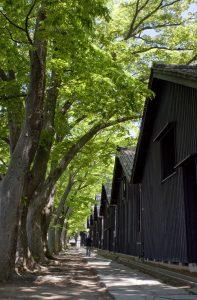 新緑の山居倉庫
